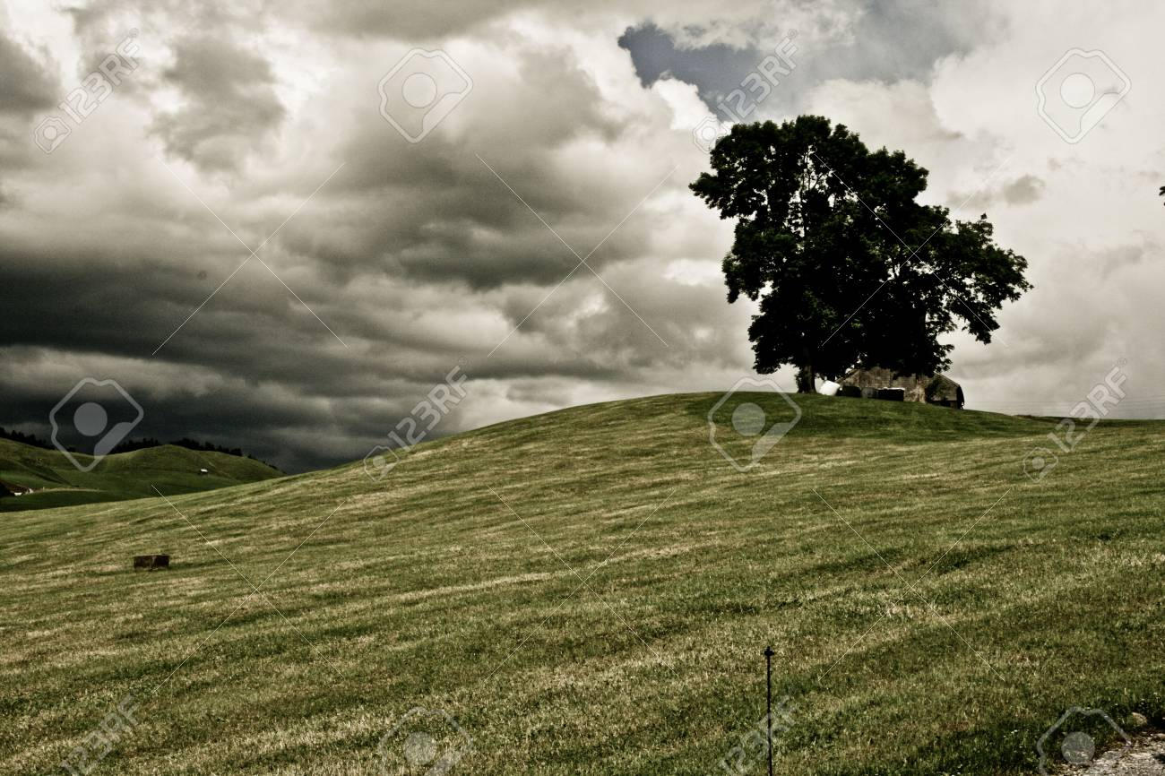 Photo Of A Hill Tree On A Cloudy Sky Stock Photo - 5115447