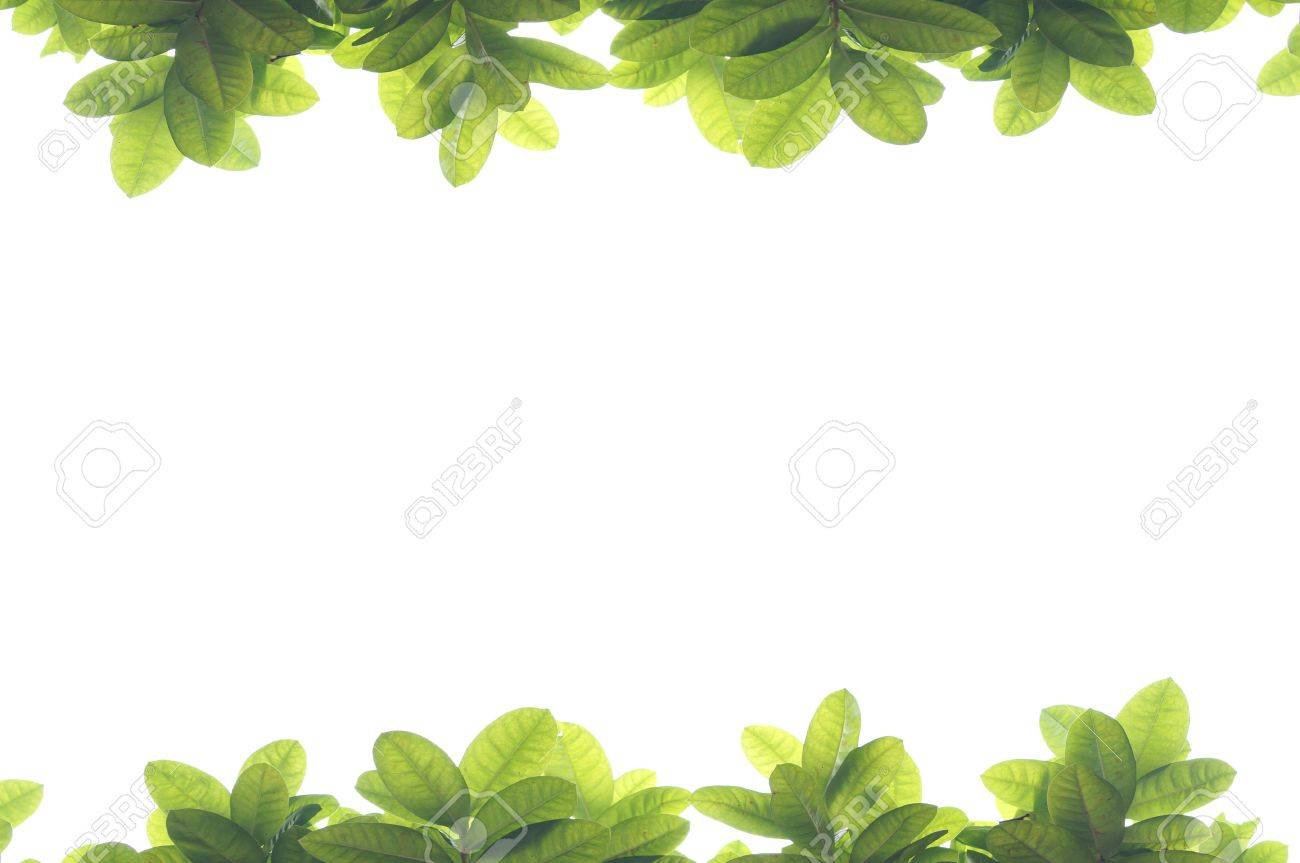 green leave frame on white background stock photo