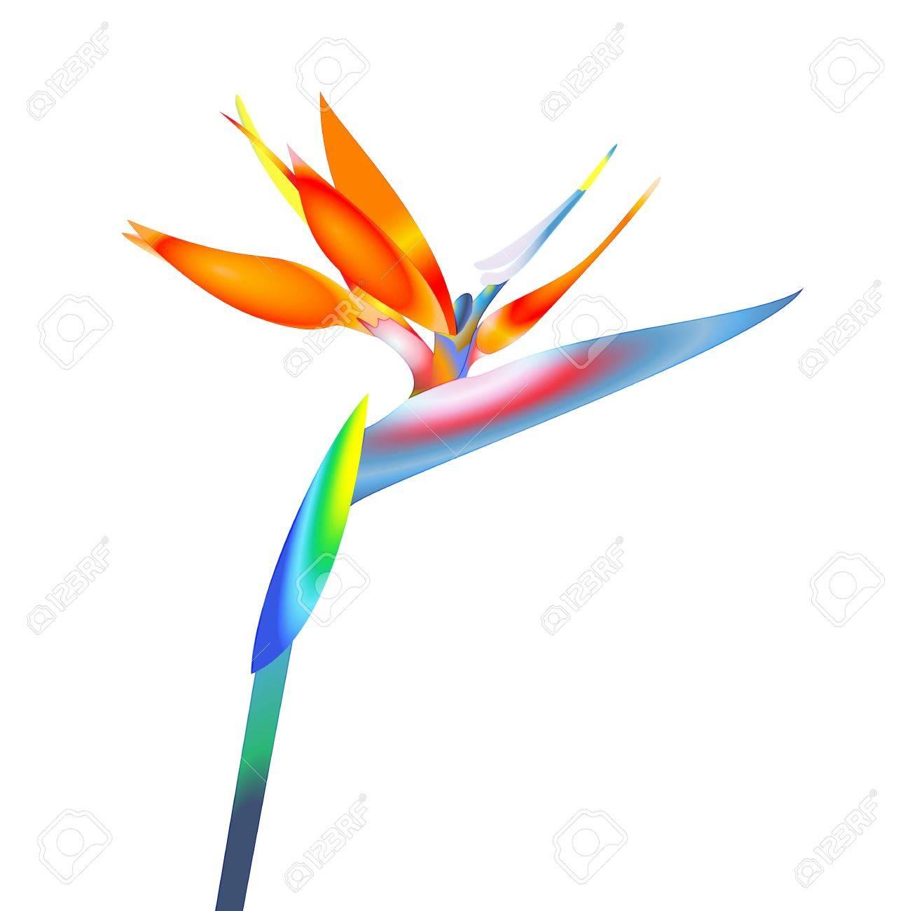 bird of paradise flower Stock Vector - 19776680