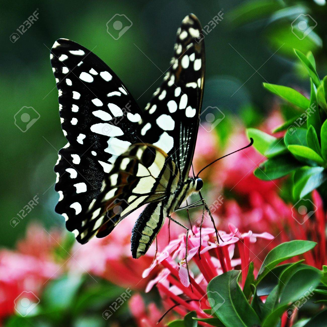 butterfly love flower stock photo picture and royalty free image