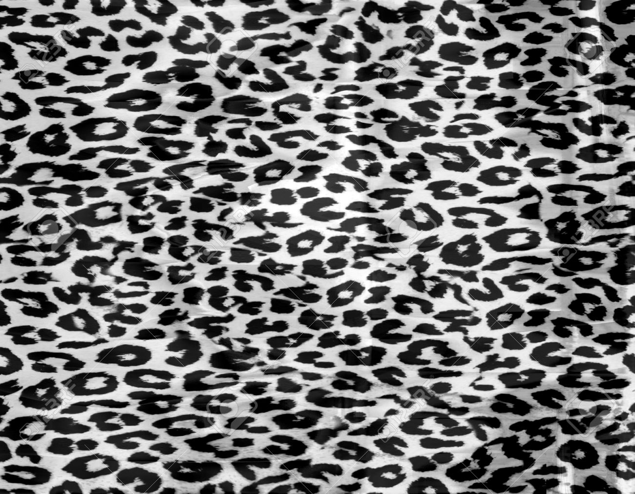 Black and white leopard print background stock photo 15230664