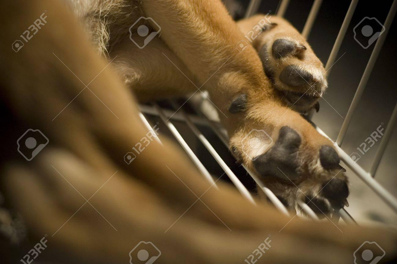 Closeup of a puppy leg a cage. Stock Photo - 1065338
