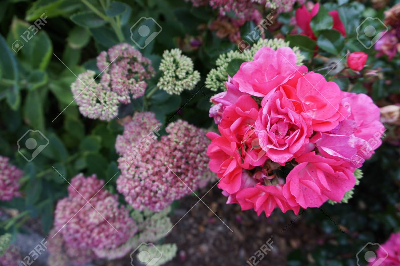 Romantic beautiful flowers in garden stock photo picture and romantic beautiful flowers in garden stock photo 101907380 izmirmasajfo
