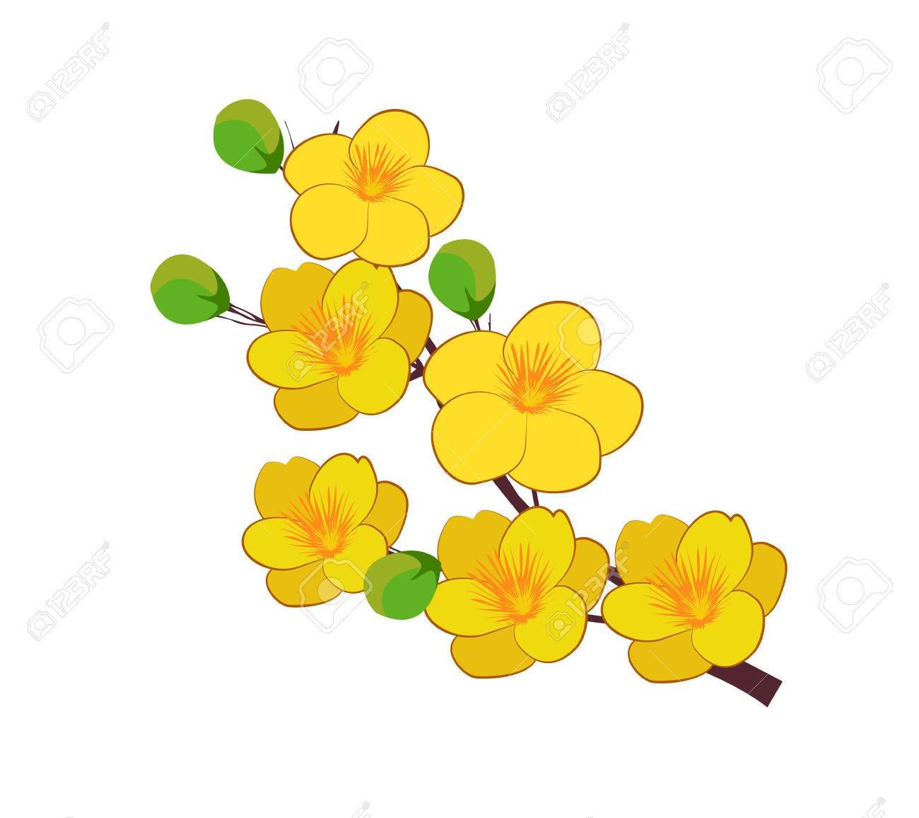 黄色いアプリコット花ベトナムの伝統的な旧正月のイラスト素材ベクタ