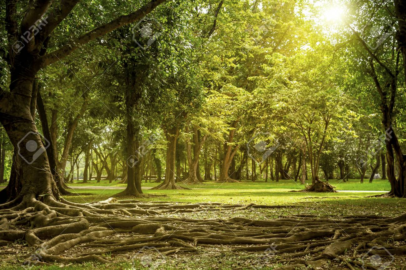 Beautiful Nature Green Tree Background In The Garden With Sunshine Stock Photo Picture And Royalty Free Image Image 108803275
