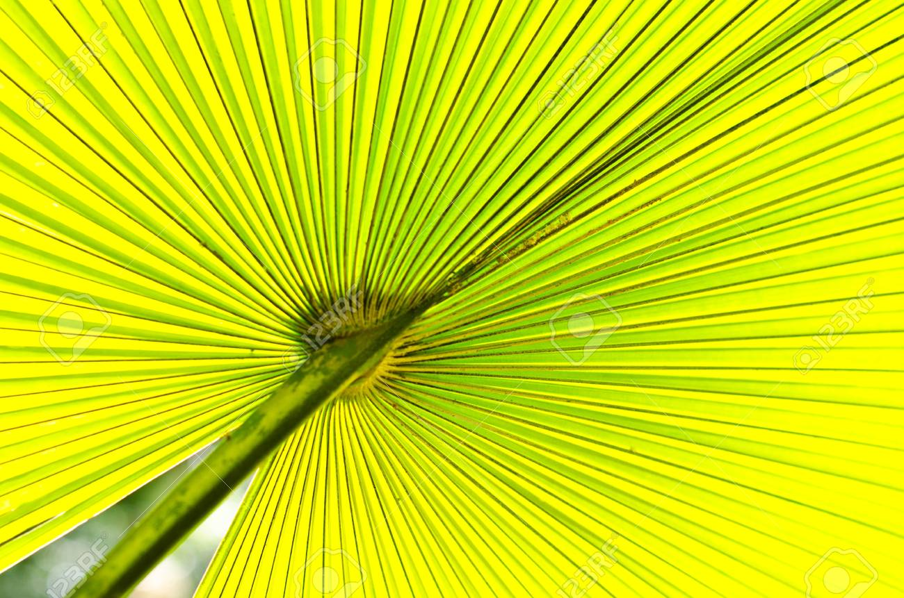 The pattern of palm leaves Stock Photo - 14716639
