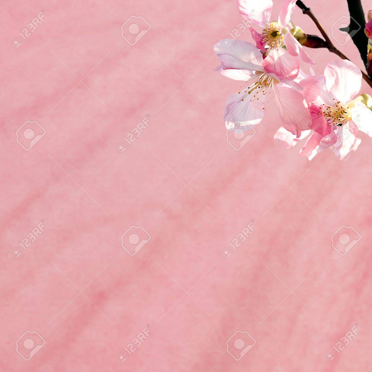Sakura with nice green and blue for background or texture use Stock Photo - 12888453