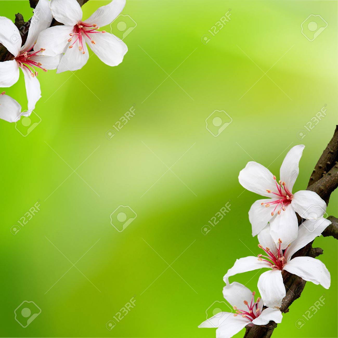 beautiful tung flowers for adv or others purpose use - 16549755