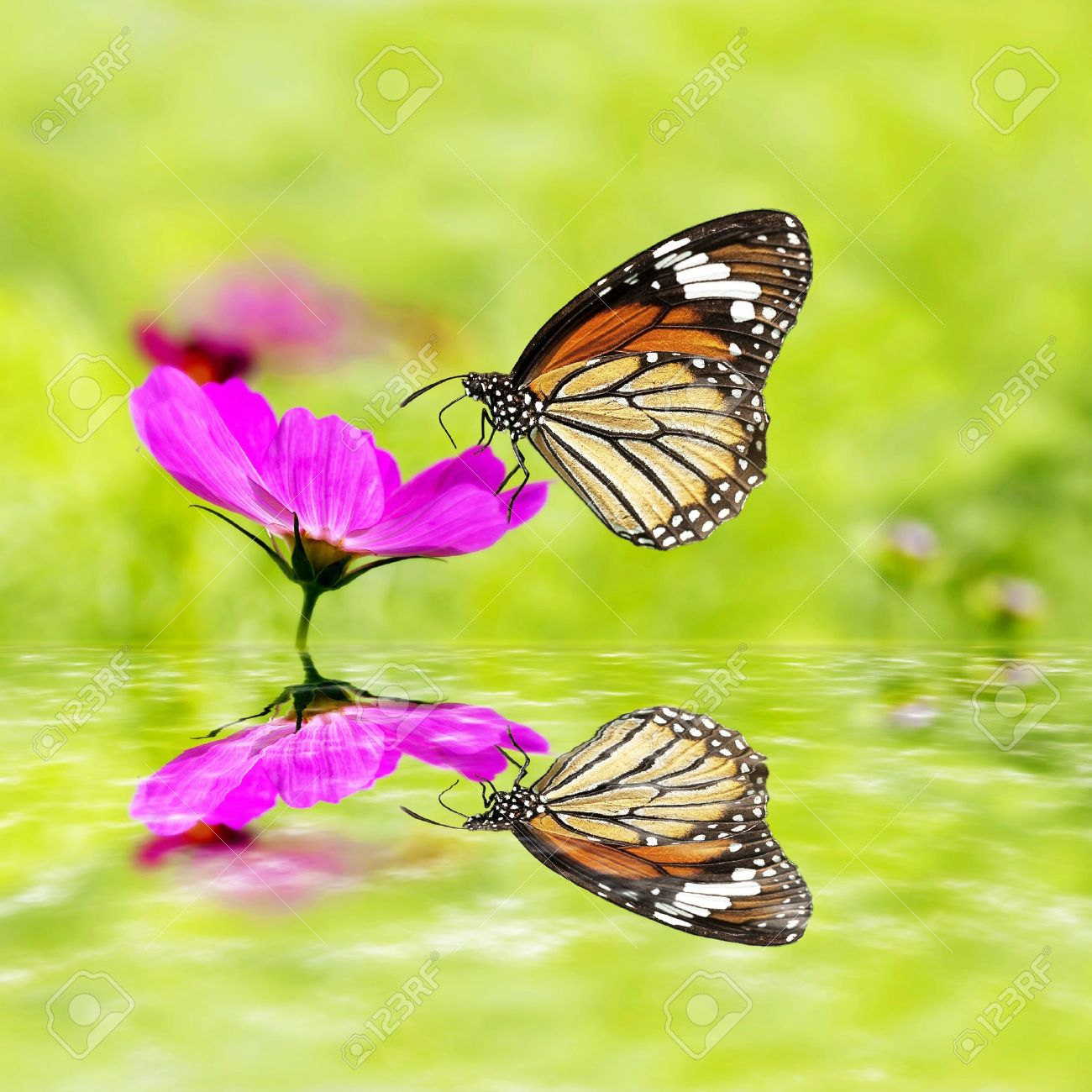 butterfly sitting on green grass field with flowers with nice