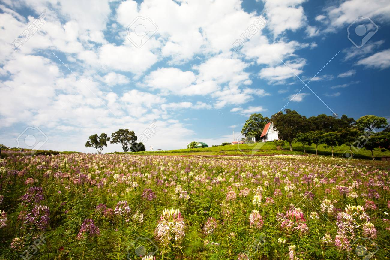 Beautiful garden in summer for adv or others purpose use Stock Photo - 16766333