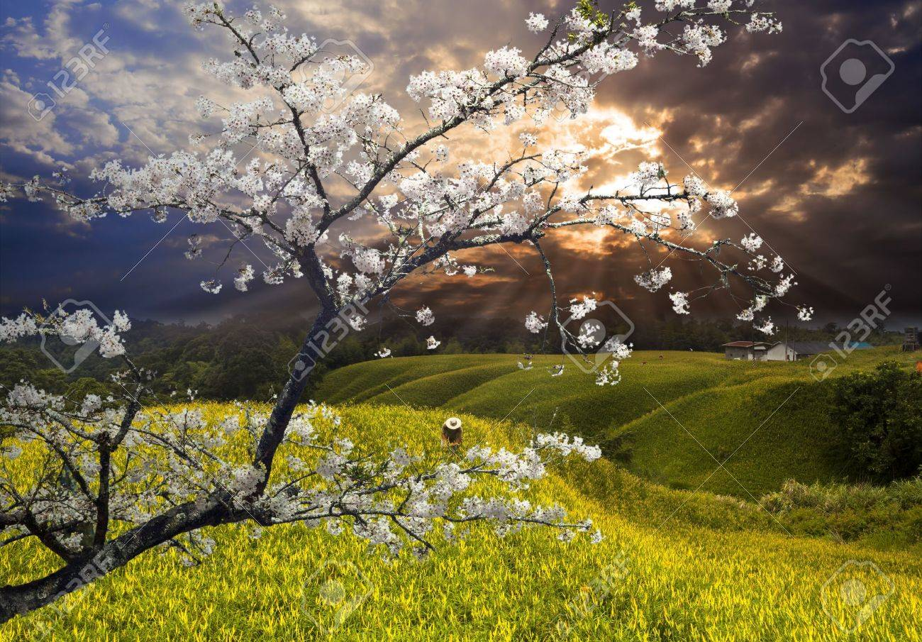 Nice landscape with sakura for adv or others purpose use Stock Photo - 17598381
