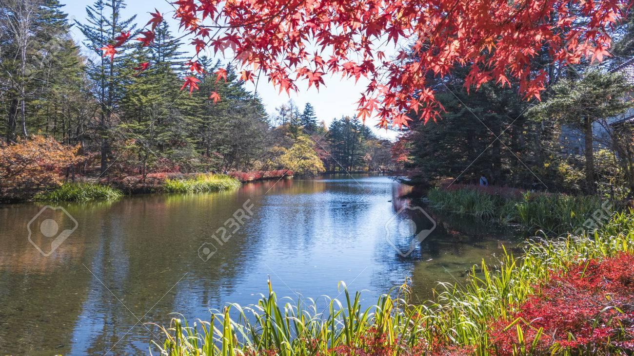 autumn color of pond karuizawa nagano japan stock photo