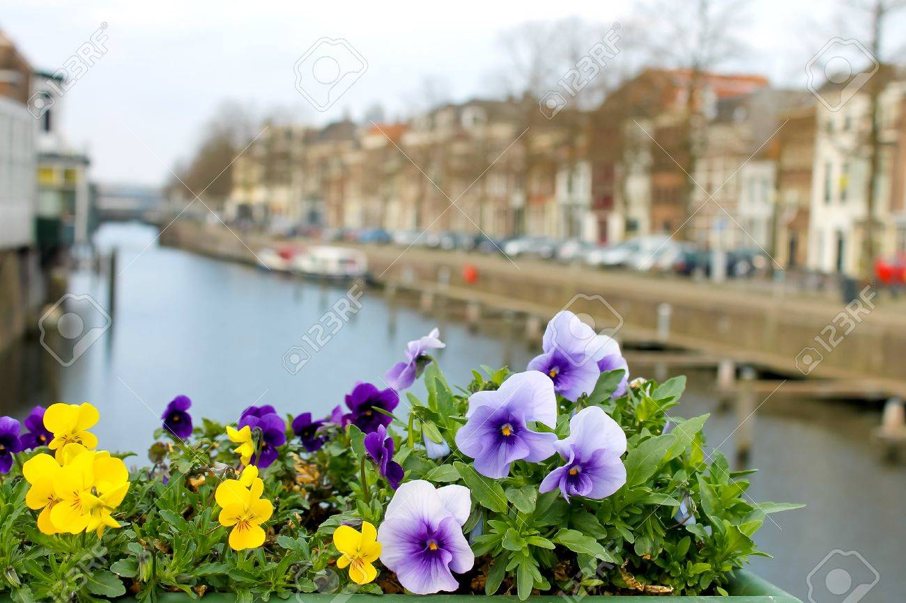 Flowers on the streets of Gorinchem. Netherlands Stock Photo - 14189566