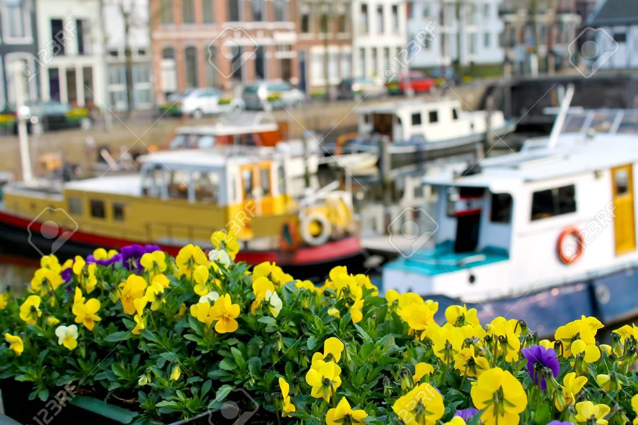 Flowers on the streets of Gorinchem. Netherlands Stock Photo - 14189571
