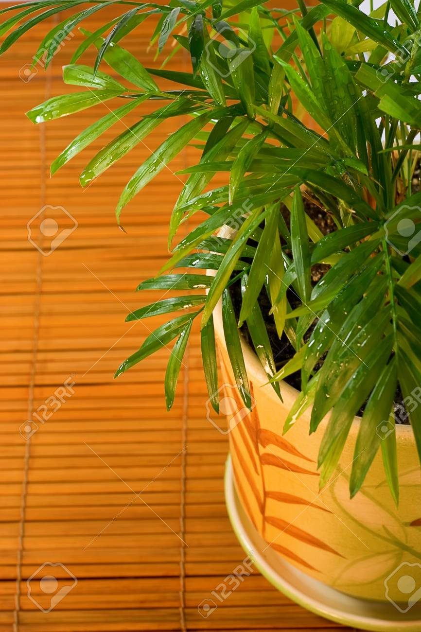 small palm in a flower pot on the table Stock Photo - 4330594