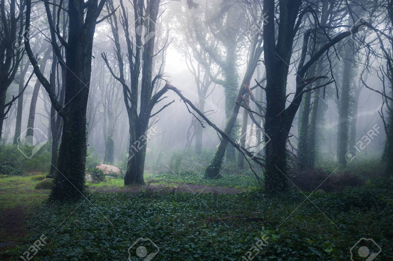 Beautiful mystical forest in a summer morning. Scenery with path in dreamy foggy forest - 144330881