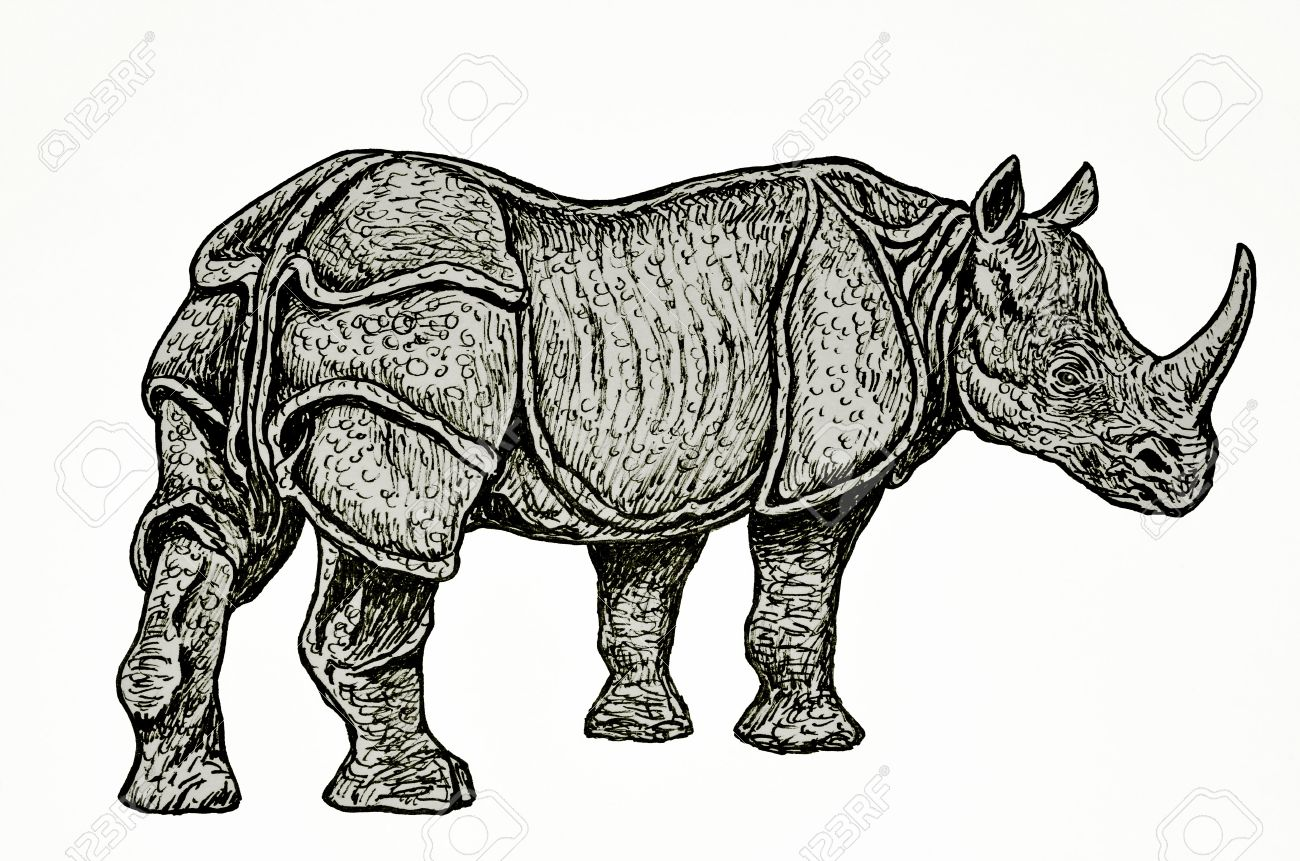 Uncategorized Rhinoceros Drawing rhino drawing stock photo picture and royalty free image 27582876