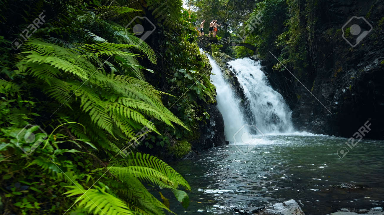 Picture of waterfall with rocks among tropical jungle with green plants and trees and water falling down into river - 171136219