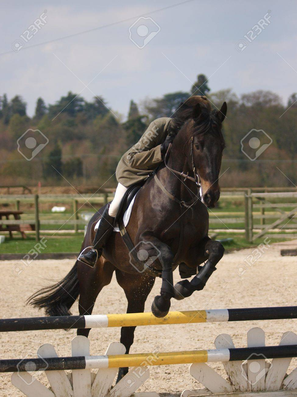 A Dark Bay Horse Clears A Fence In A Showjumping Arena Stock Photo Picture And Royalty Free Image Image 19134170
