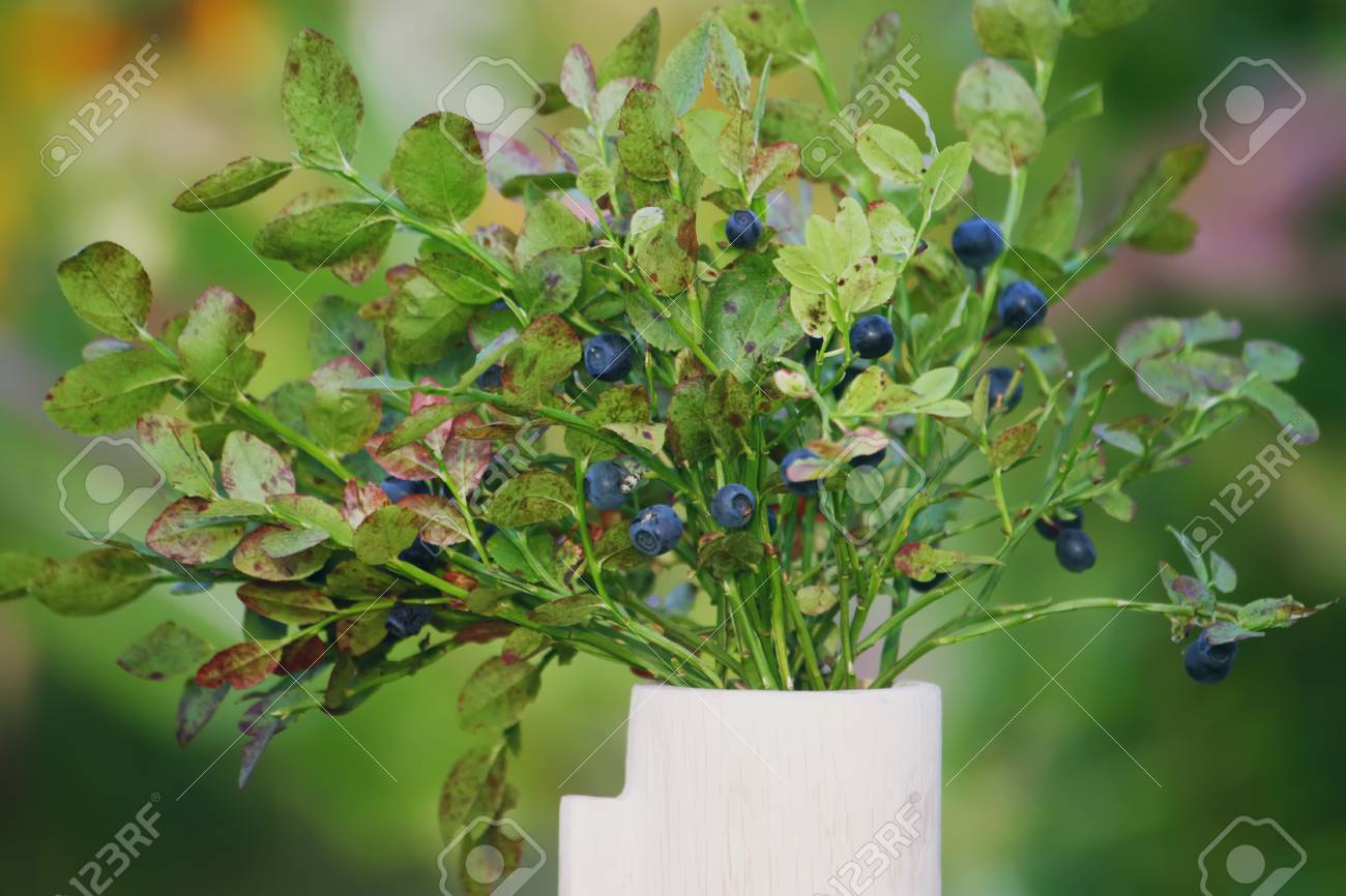 Bouquet Of Ripe Wild Forest Blueberry And Cranberry Plants In Stock Photo Picture And Royalty Free Image Image 76678392