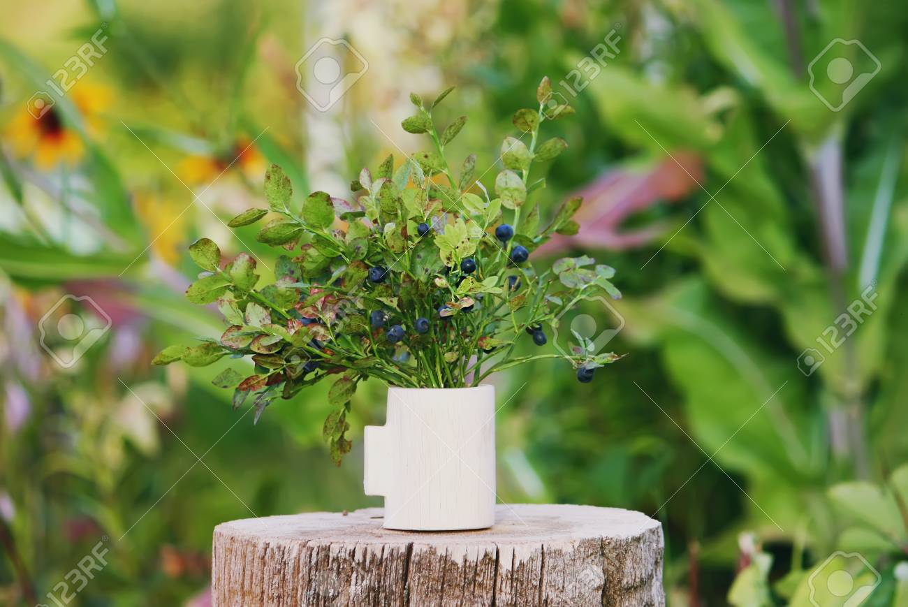 Bouquet Of Ripe Wild Forest Blueberry And Cranberry Plants In Stock Photo Picture And Royalty Free Image Image 76678453