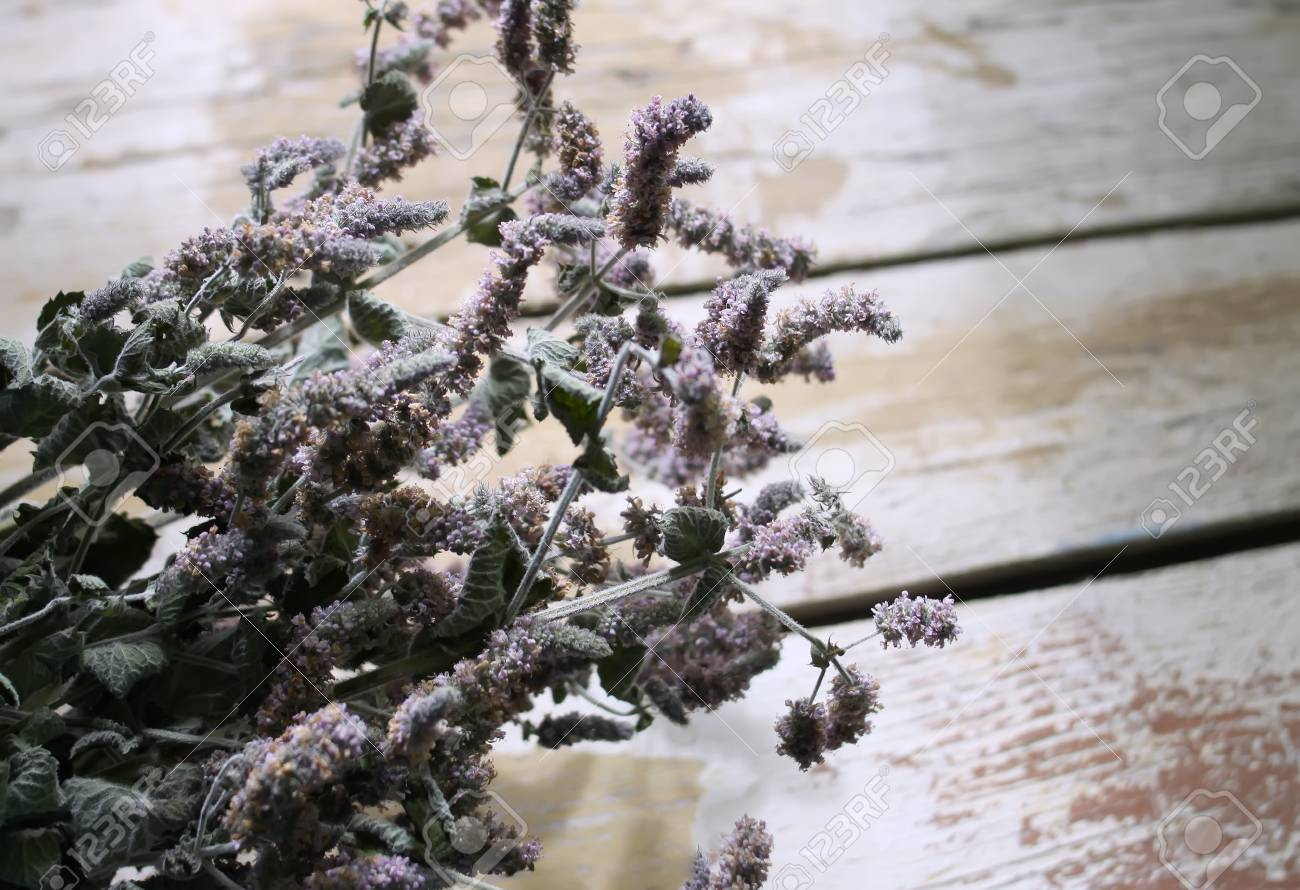 Dry Peppermint Plants With Purple Flowers For Herbal Tea Stock