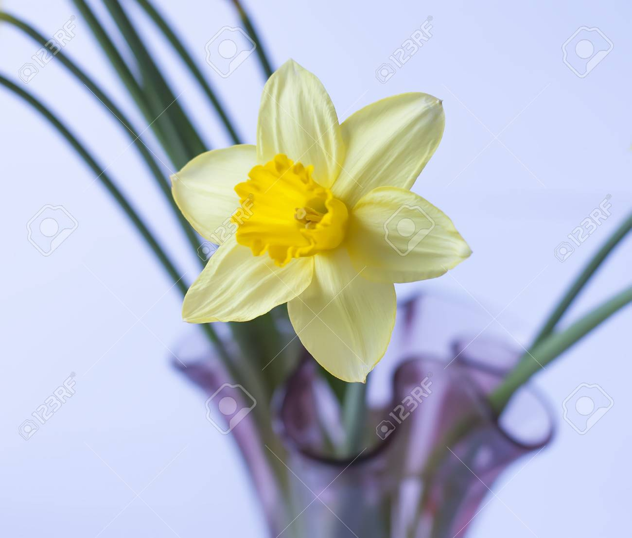 Beautiful Bouquet Of Spring Yellow Narcisus Flowers In A Glass