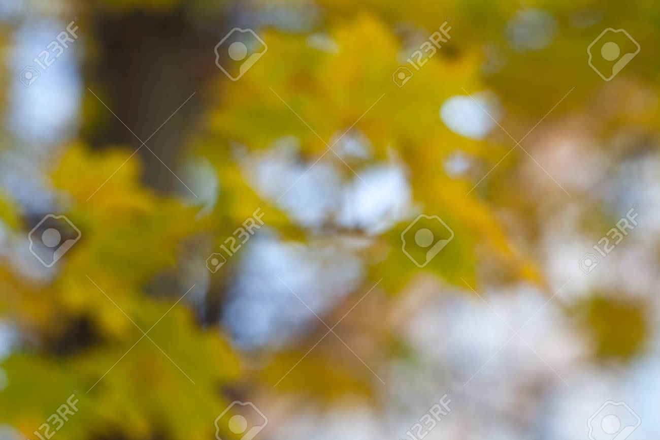 Blurred background with yellow autumn leaves  Beautiful bokeh