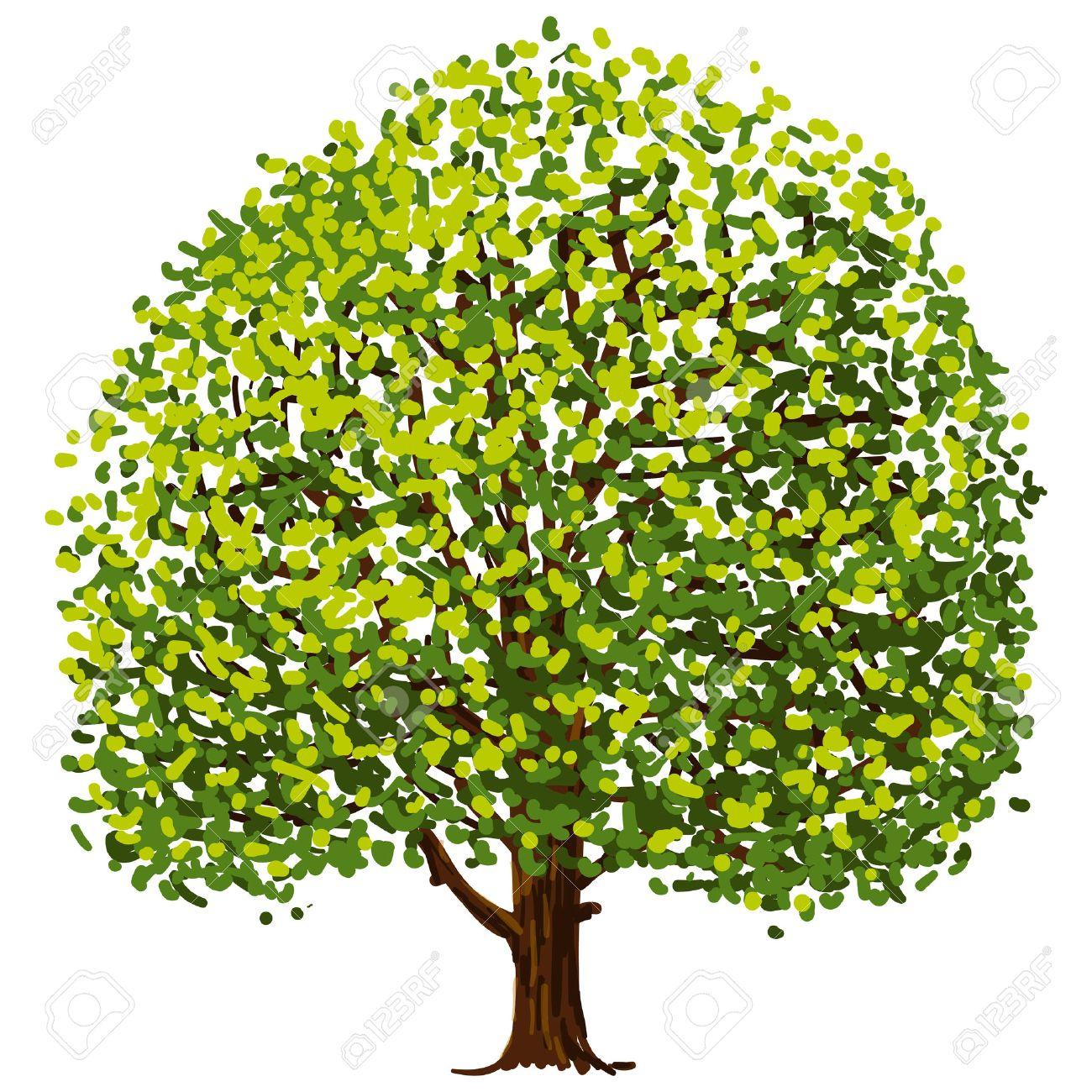 oak tree drawing stock photos u0026 pictures royalty free oak tree