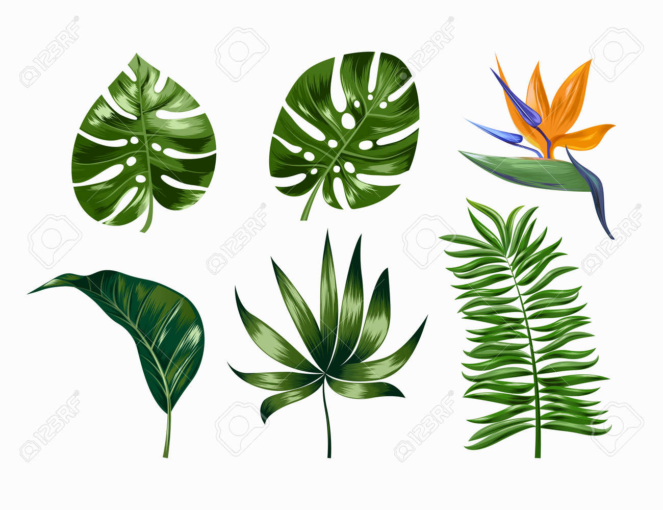 Vector tropical trendy summer palm leaves and flower, jungle leaves, split leaf, philodendron leaves isolated on white background. EPS 10. - 149641240