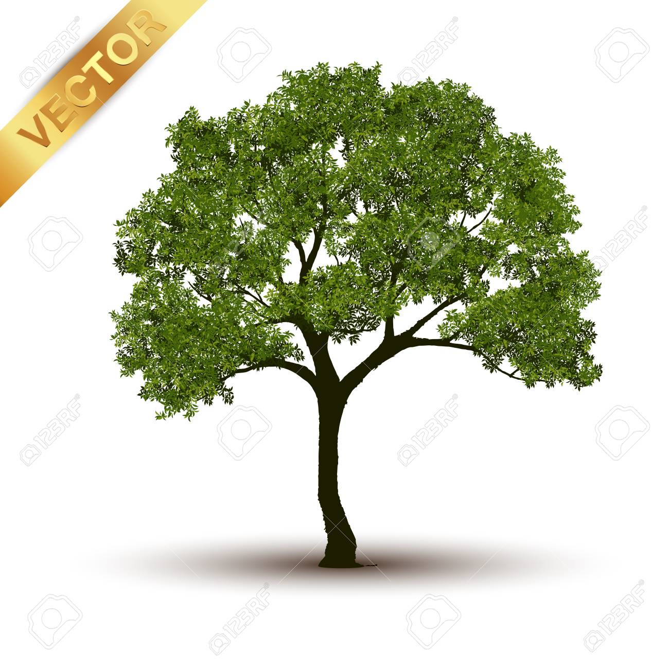 Beautiful Tree Realistic On A White Background Royalty Free