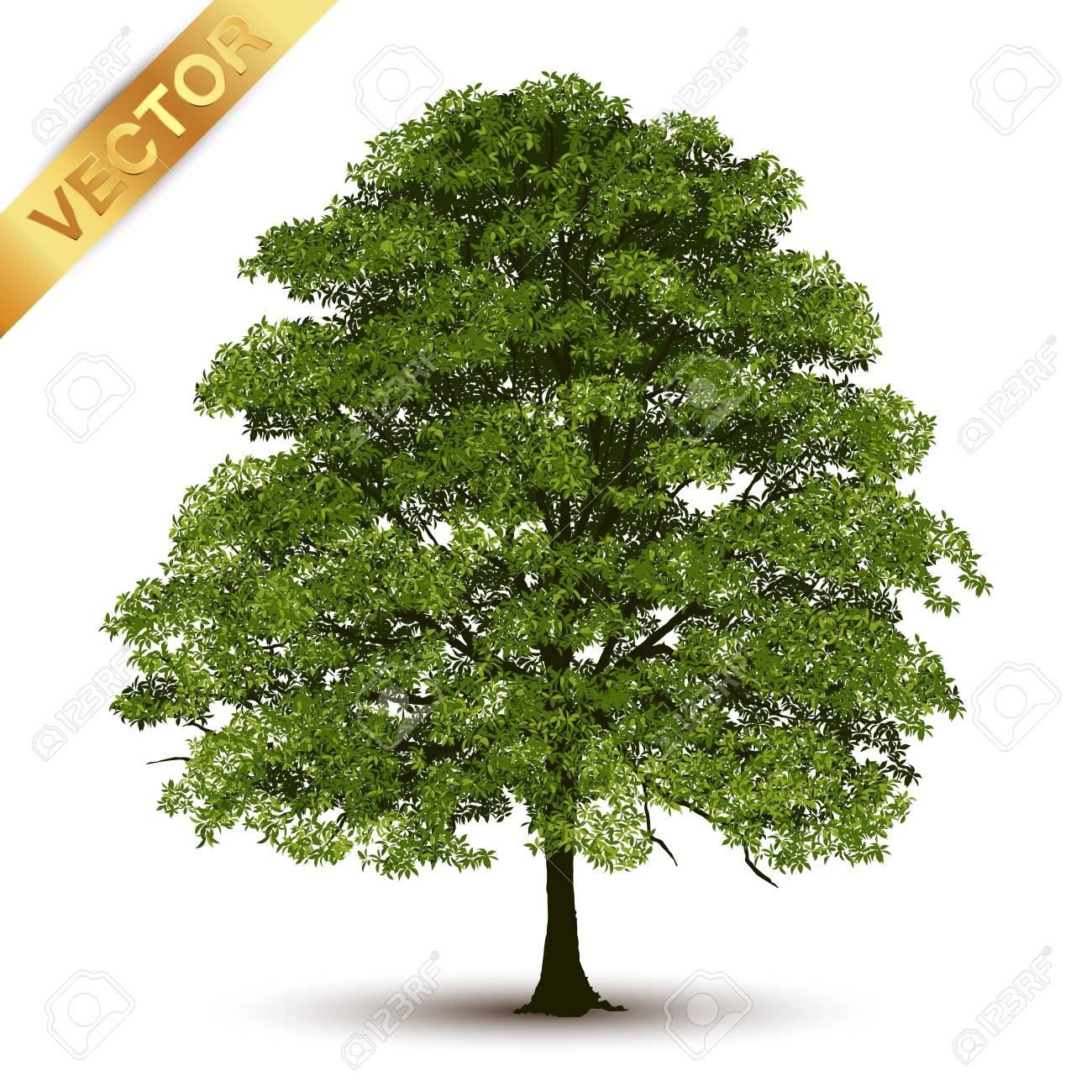 Beautiful tree Realistic on a white background. - 99376903