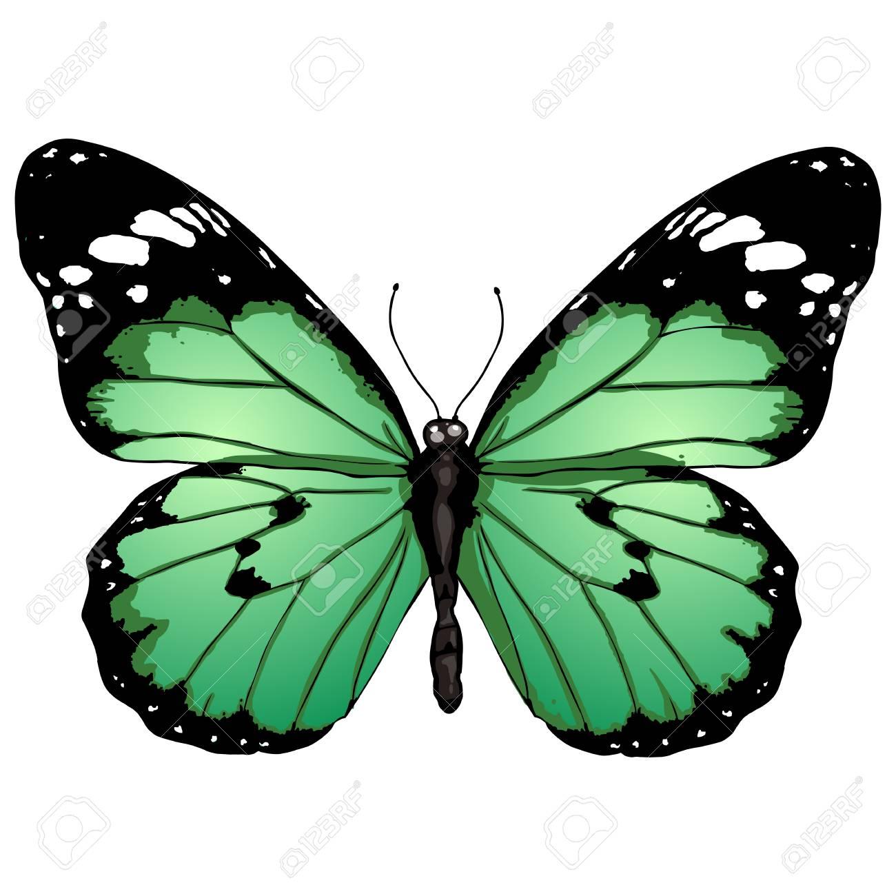 Papillon De Couleur De Dessin Animé De Vecteur Sur Bckground Blanc