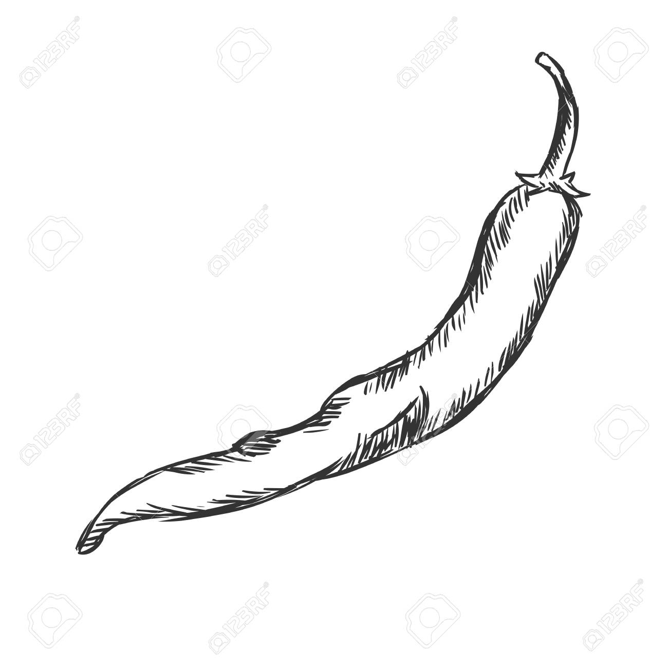Vector Single Sketch Chili Pepper on White Background