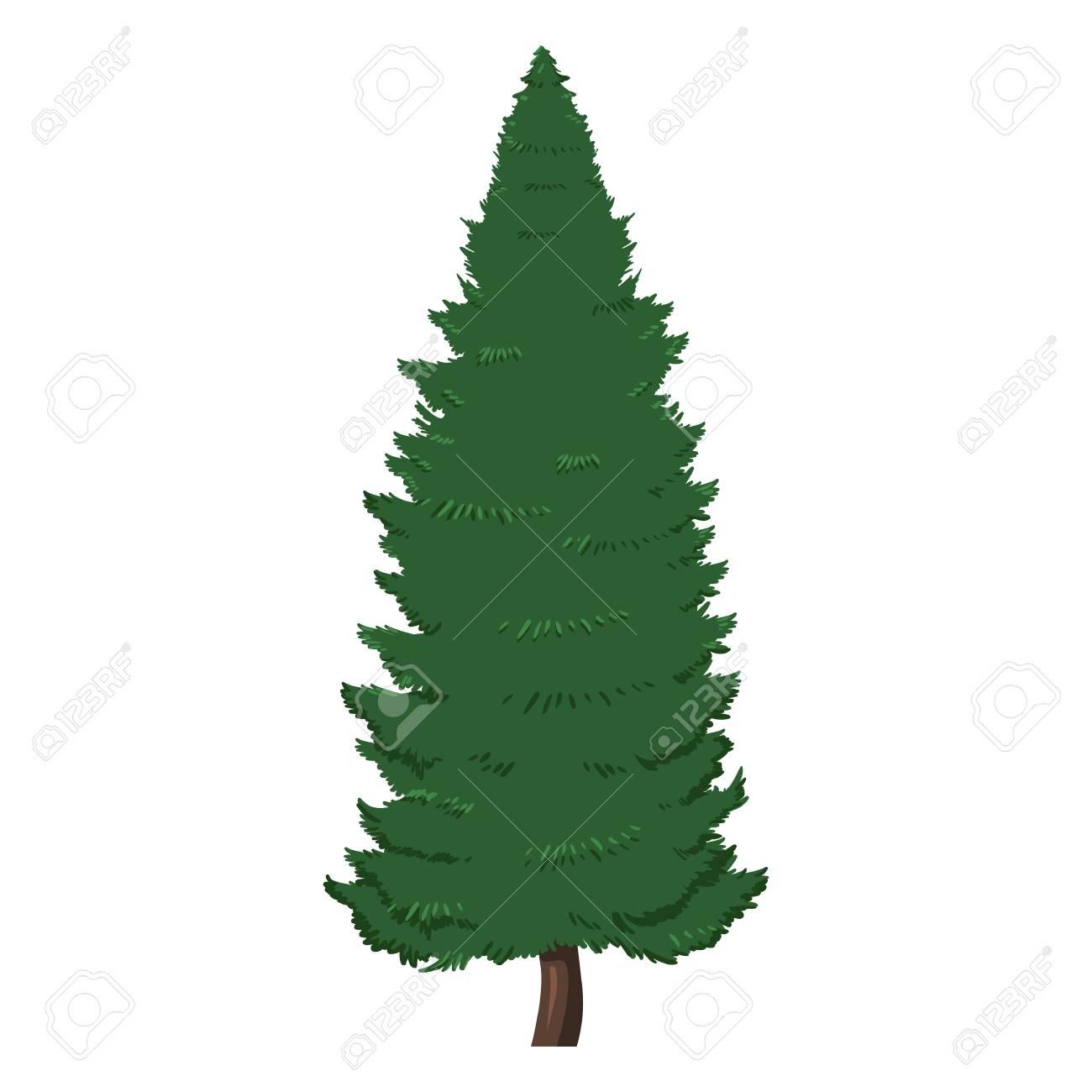 Vector Single Isolated Cartoon Pine Tree On White Background Royalty