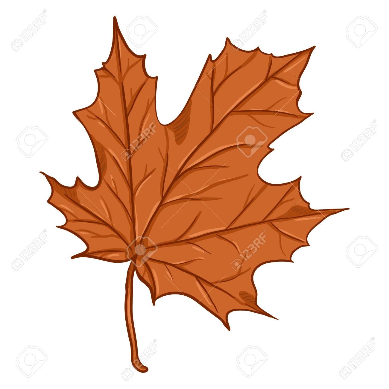 Vector Cartoon Illustration Autumn Fallen Orange Leaf Of Maple Royalty Free Cliparts Vectors And Stock Illustration Image 105440147