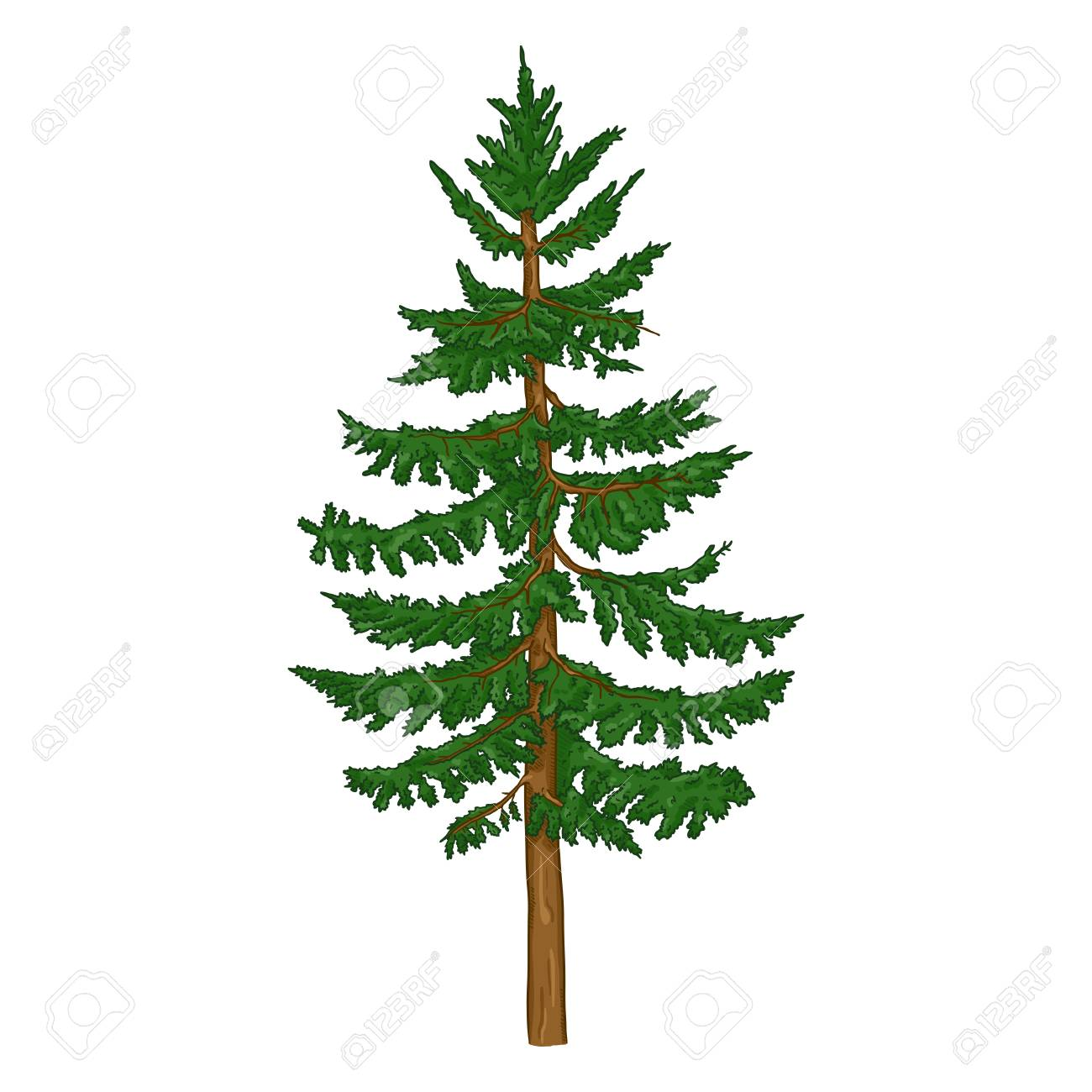 Vector Single Cartoon Spruce Evergreen Conifer Tree Royalty Free Cliparts Vectors And Stock Illustration Image 123324587 Bright colored cartoon layouts with pointy tips and thick outlines. vector single cartoon spruce evergreen conifer tree