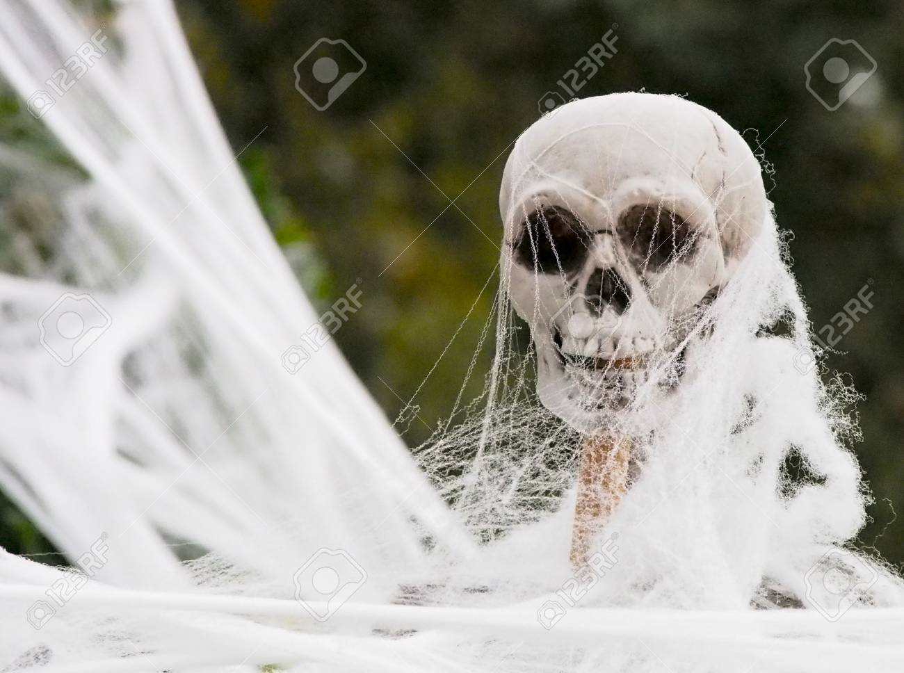 A Spooky Plastic Skeleton Being Covered In Fake Spiderweb For