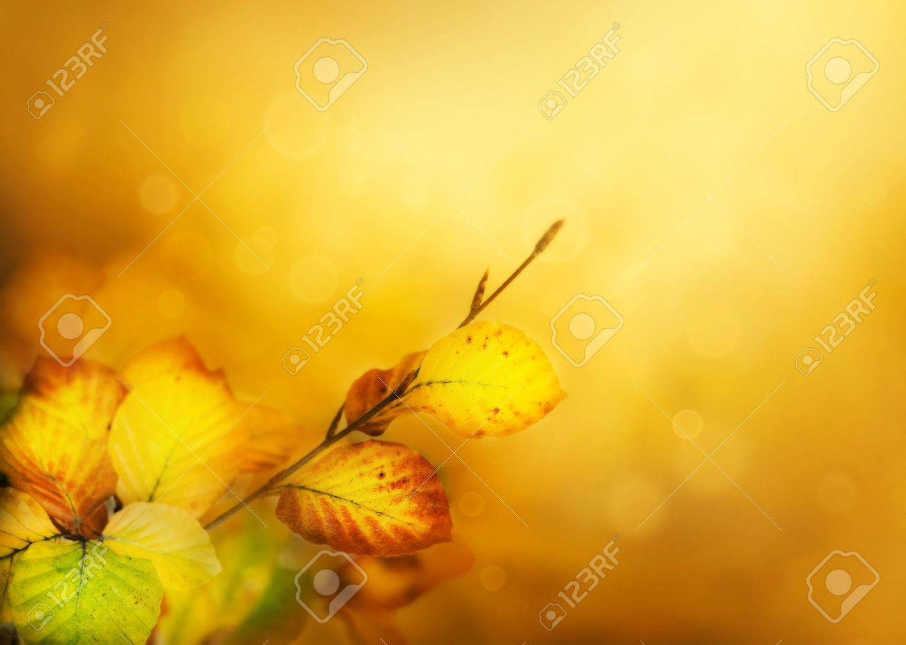 Colorful Autumn leaves background with bokeh lights Stock Photo - 10842903