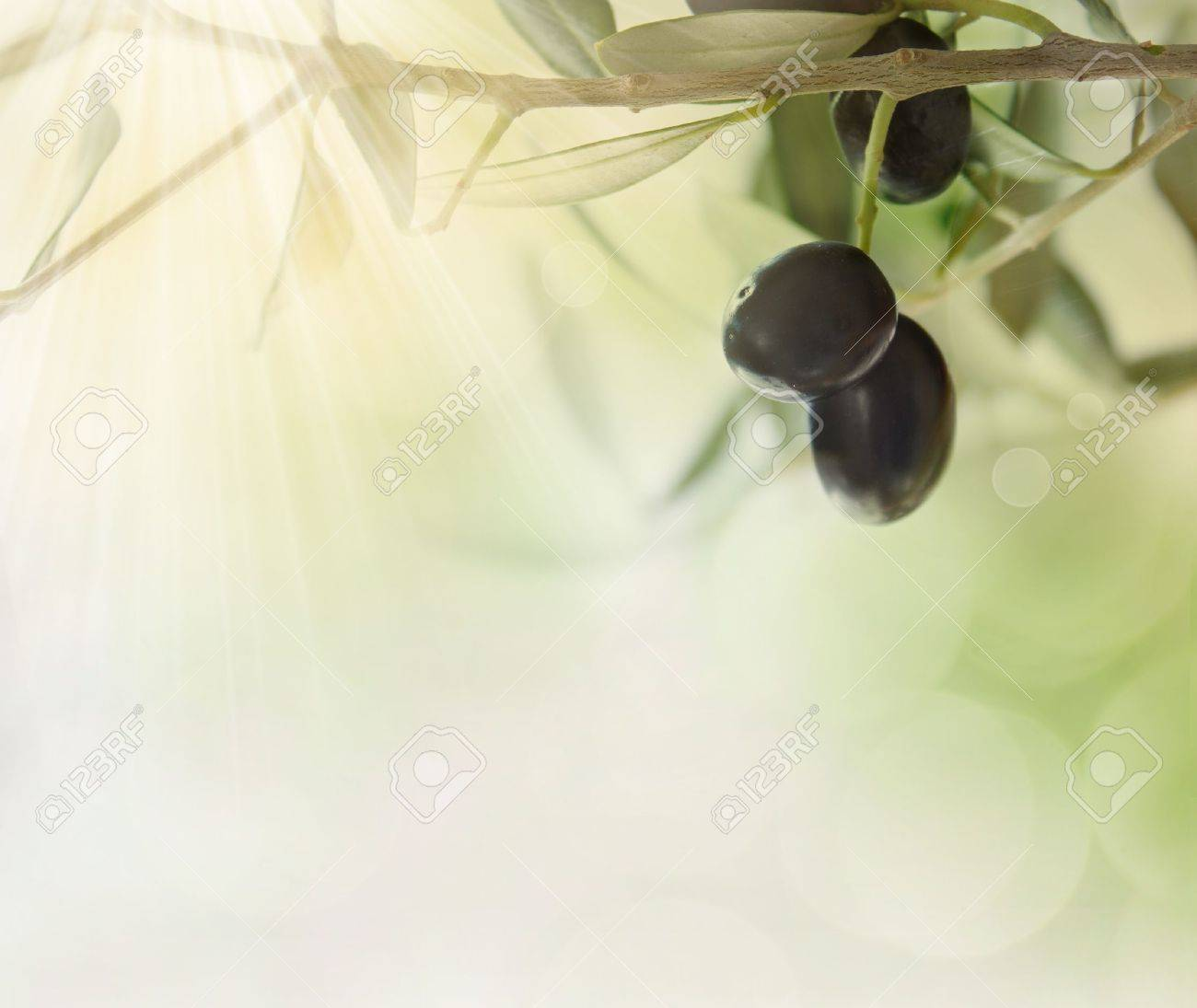 Summer olives design background with fresh olive branch and bokeh lights Stock Photo - 10986753