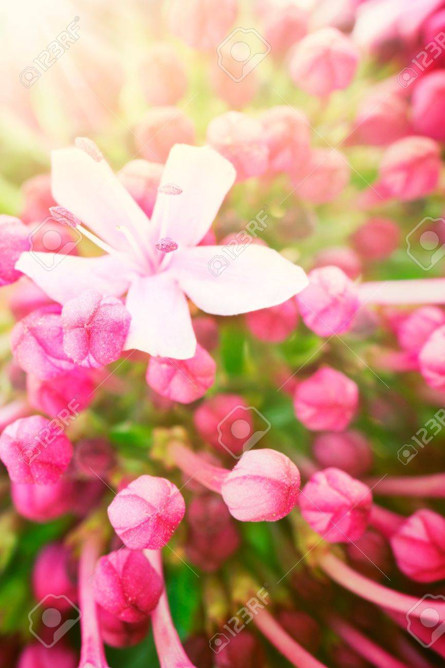 Beautiful abstract floral background with pink flower buds and defocused lights. Border design in pink and green Stock Photo - 10986754