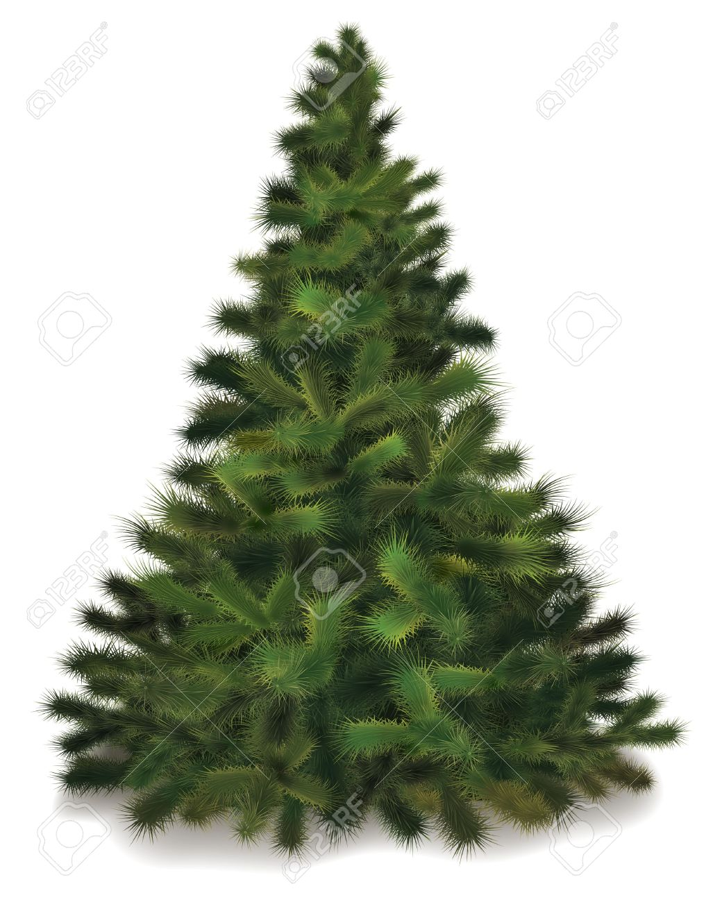 Christmas Tree. Realistic Illustration Of Fluffy Pine Tree Royalty ...