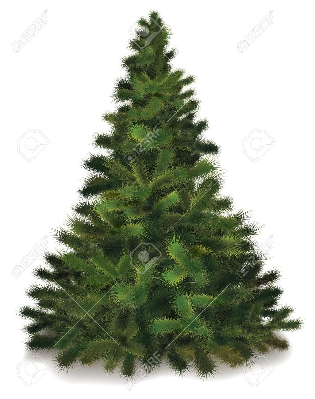 christmas tree realistic illustration of fluffy pine tree stock vector 11341334 - Realistic Christmas Trees