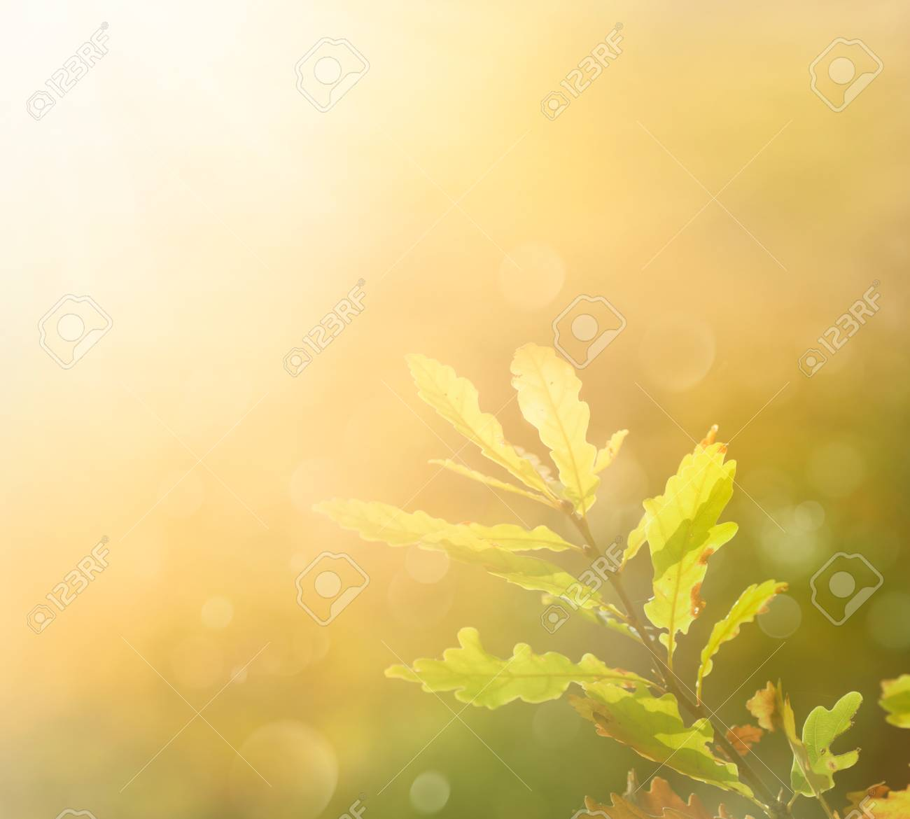 Autumn leaf in the morning. Background with autumn colors and copyspace Stock Photo - 11595864