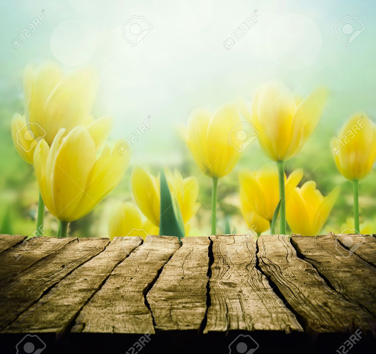 Easter Background With Tabletop Spring Flowers Background Wood