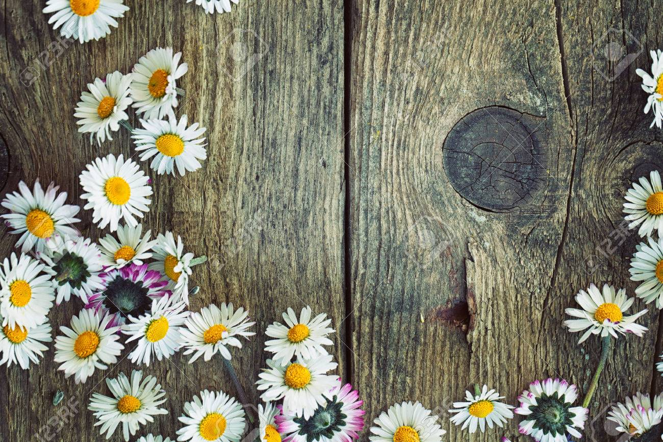 Daisy images stock pictures royalty free daisy photos and stock daisy spring background fresh daisies on wood nature background with copy space stock dhlflorist Image collections