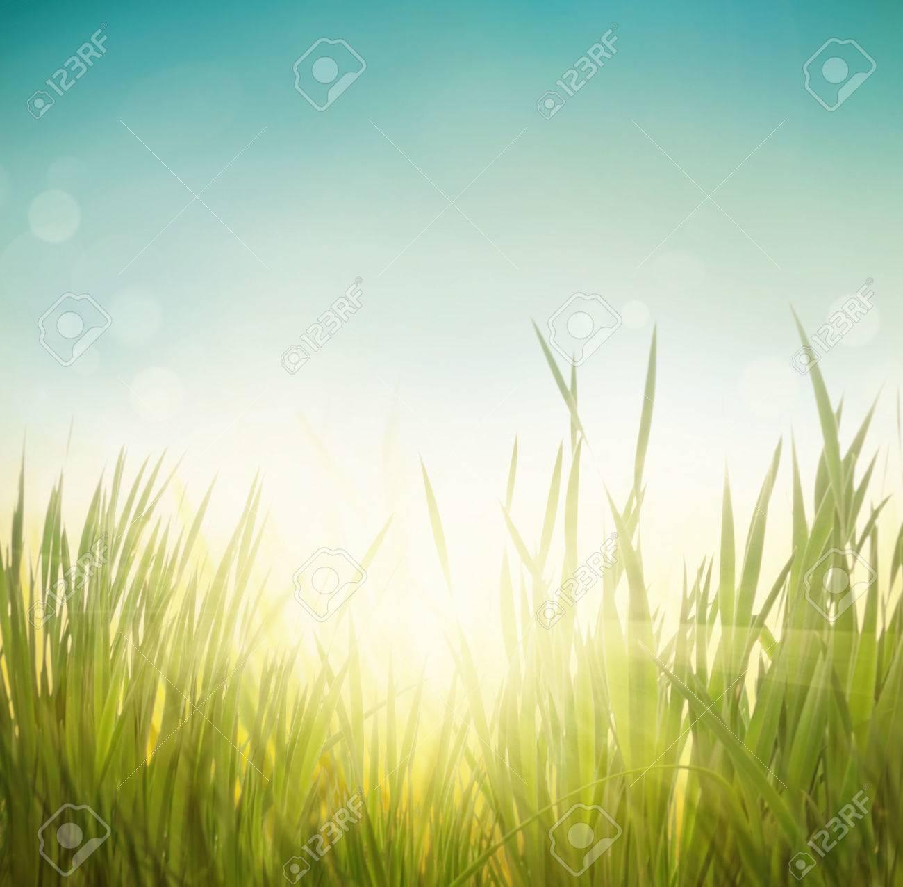 Spring grass. Blur background. Summer nature. Bokeh blurred background. - 42140250