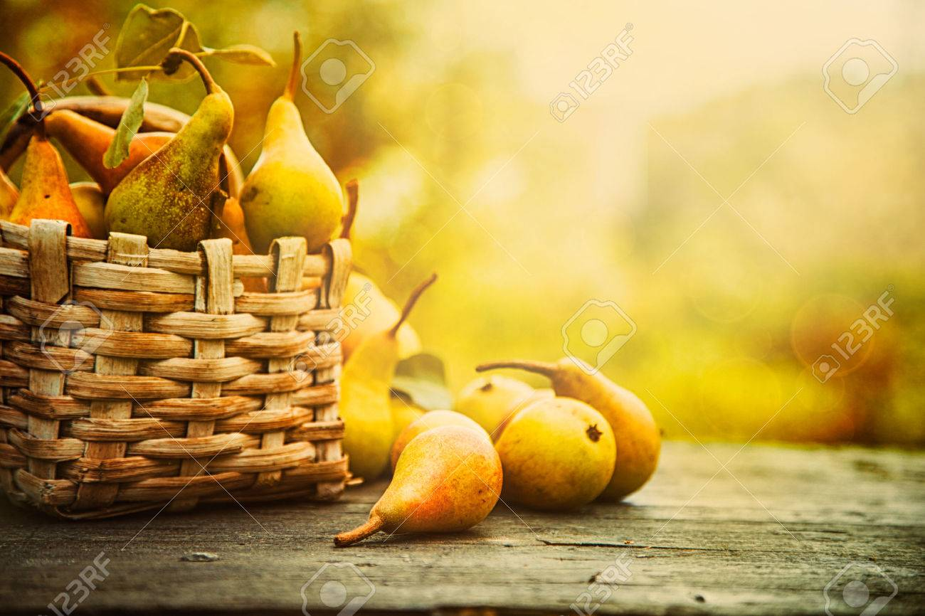 Autumn nature concept. Fall pears on wood. Thanksgiving dinner - 44697790