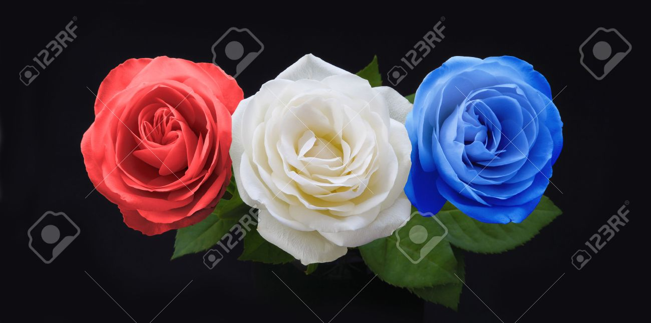 Symbolic red white and blue roses three rose heads in red white symbolic red white and blue roses three rose heads in red white and blue on dhlflorist Images