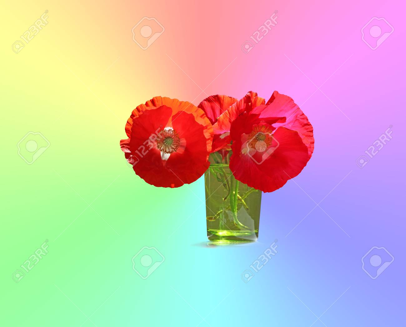 Poppy the flower with many meanings around the world three poppy the flower with many meanings around the world three beautiful red poppies in mightylinksfo Image collections